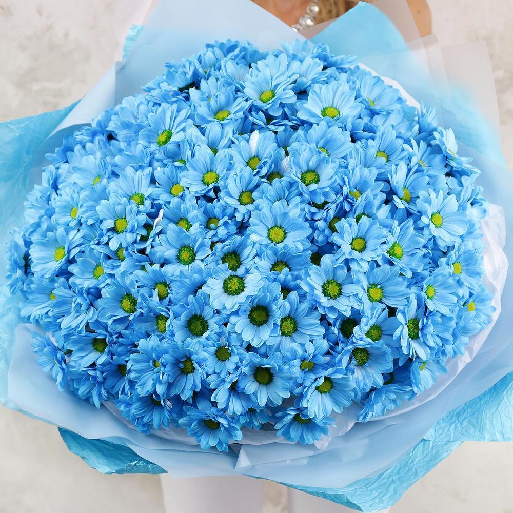 большой букет синие хризантемы фото годик девушка