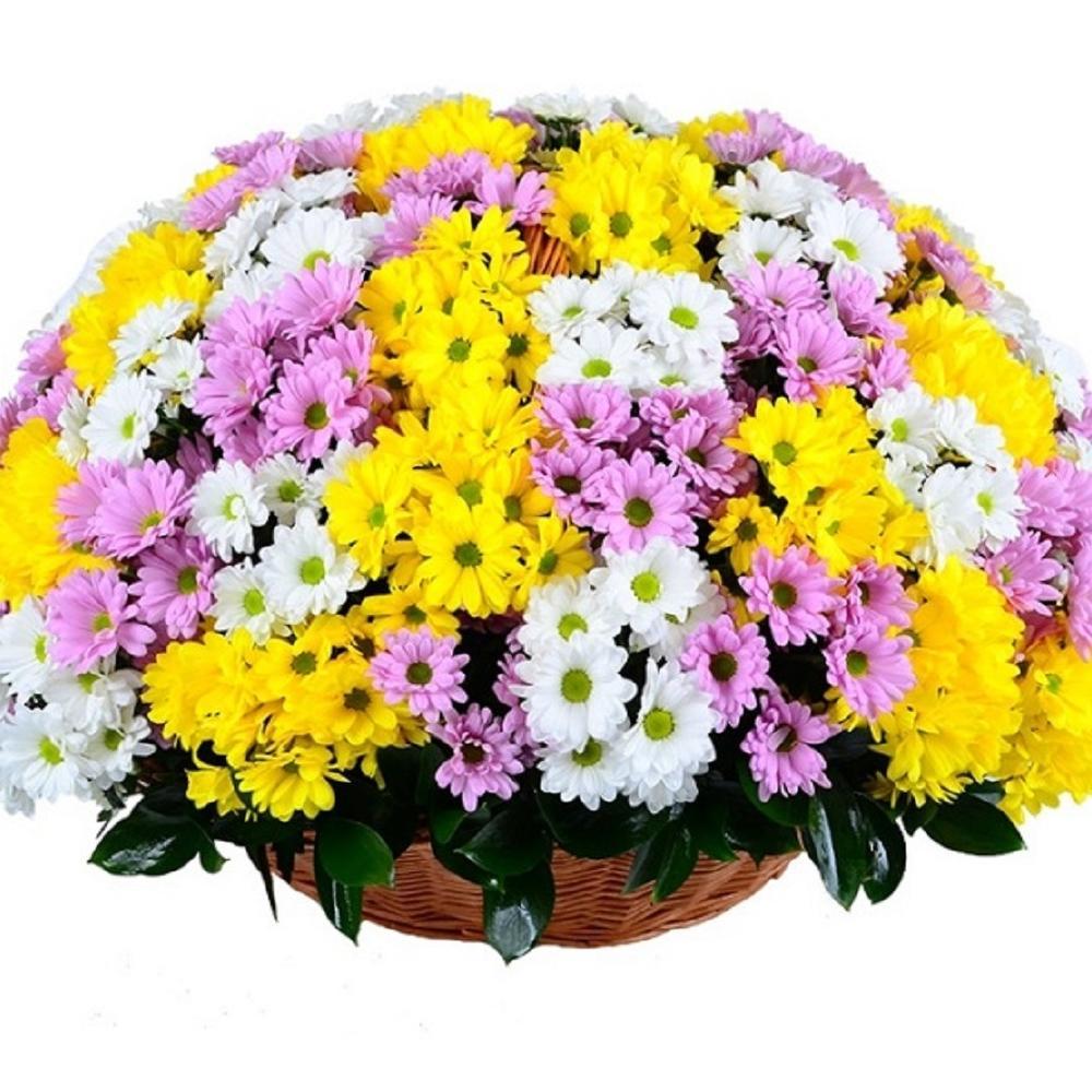 Картинка прикол, картинка с хризантемами с днем рождения