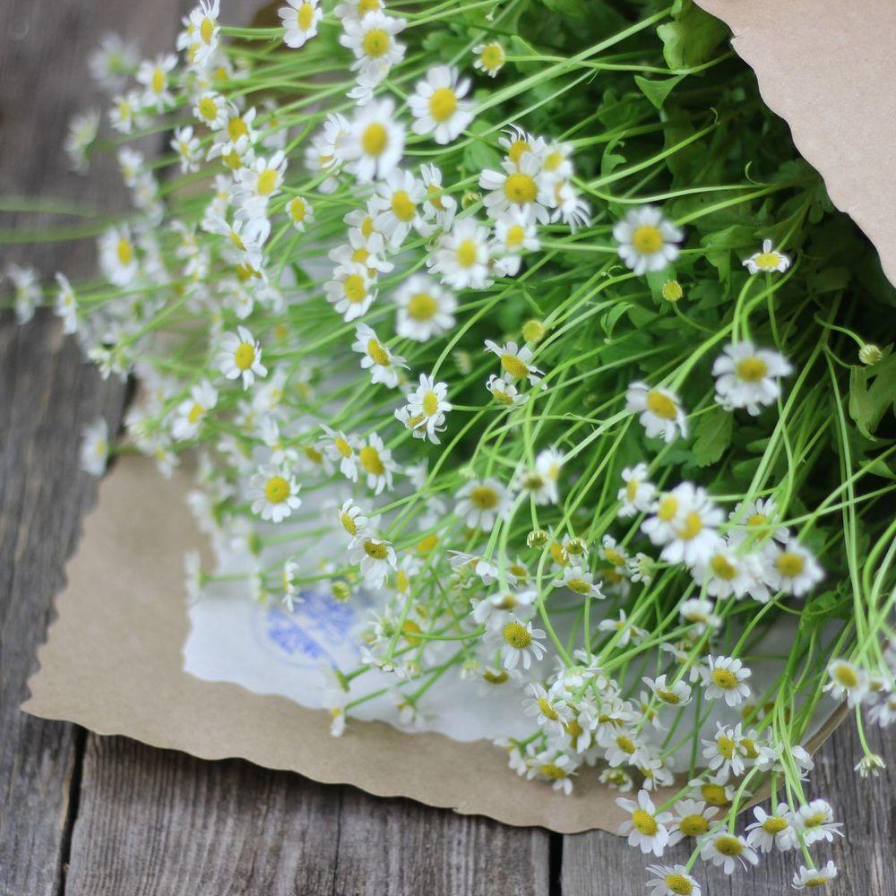 Каталог цветов по заказу через полевых