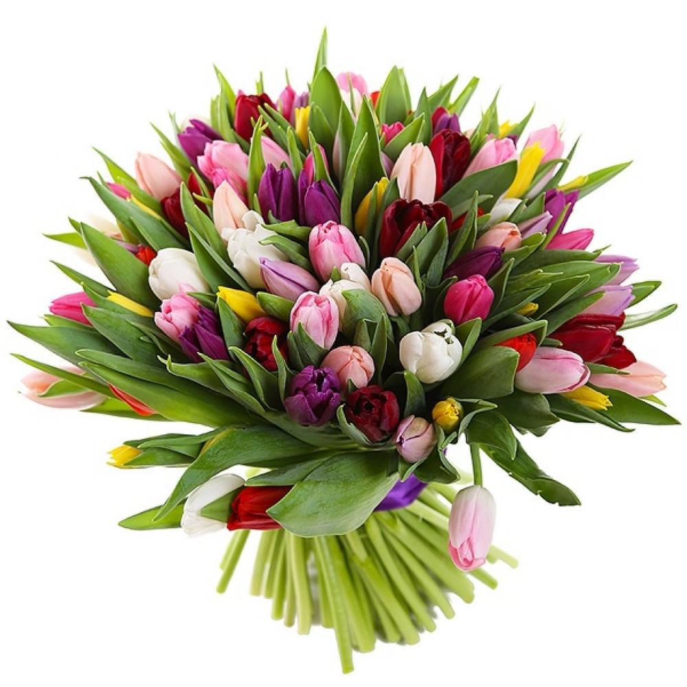 маленькие картинки с тюльпанами ранних