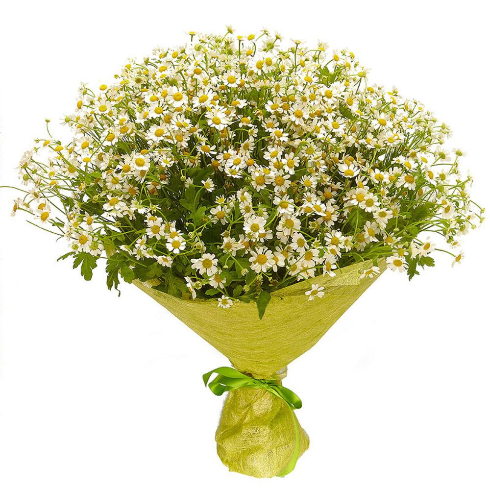 Невесты, цветы ромашки цена за штуку москва