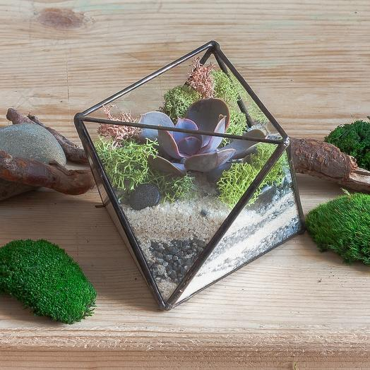 "Флорариум с суккулентом ""Октаэдр мини"": букеты цветов на заказ Flowwow"