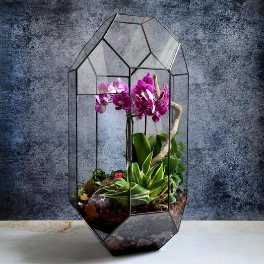 """Флорариум с орхидеей """"Тропикана Брайт"""": букеты цветов на заказ Flowwow"""