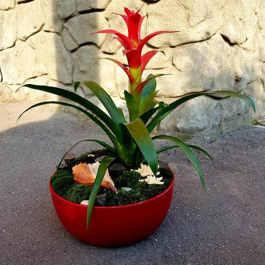 Тропическое чудо: букеты цветов на заказ Flowwow