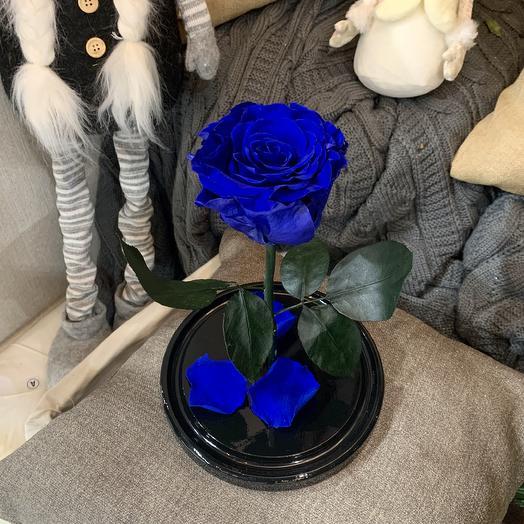 Роза в колбе синяя Премиум: букеты цветов на заказ Flowwow