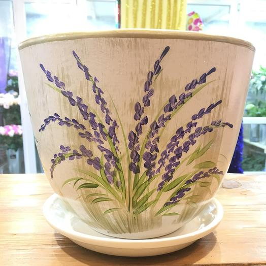 Pots Lavender: flowers to order Flowwow