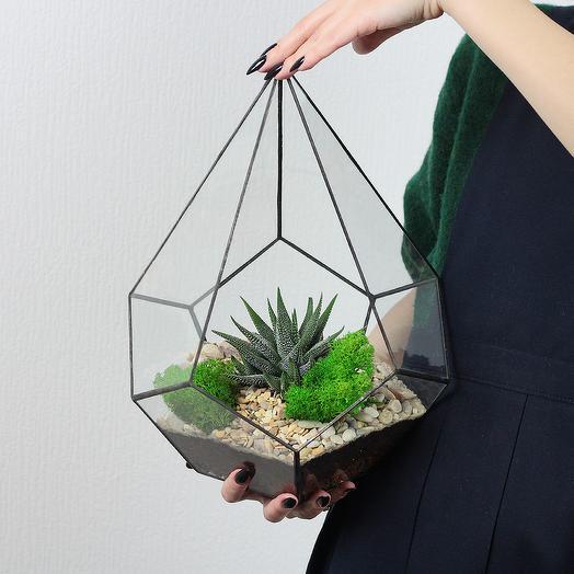 Флорариум Кристалл с Суккулентом