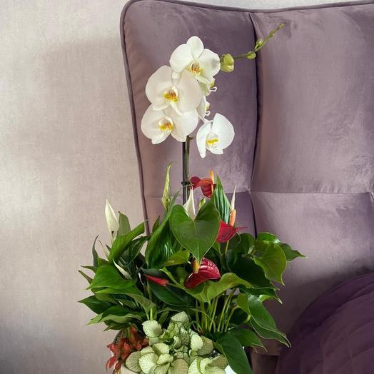 Садик из комнатных растений «Нежность»