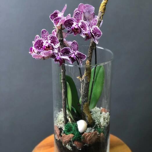 Колба с орхидеей