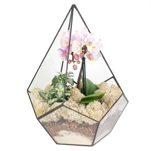 Орхидариум 2: букеты цветов на заказ Flowwow