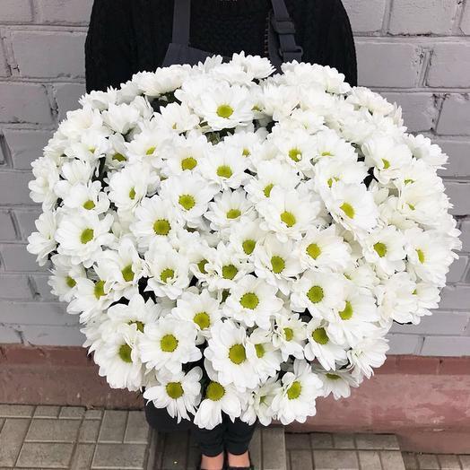 Букет из 25 белых хризантем: букеты цветов на заказ Flowwow