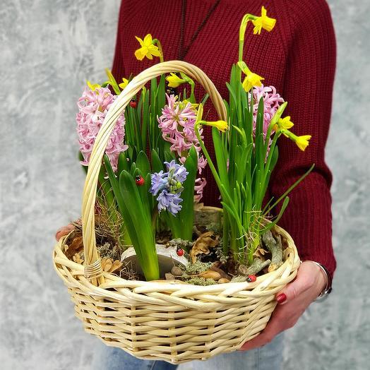 "Корзина с гиацинтами и нарциссами ""Лесная"": букеты цветов на заказ Flowwow"