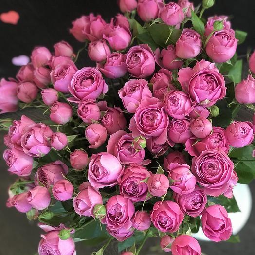 Роза-Пион Мистик