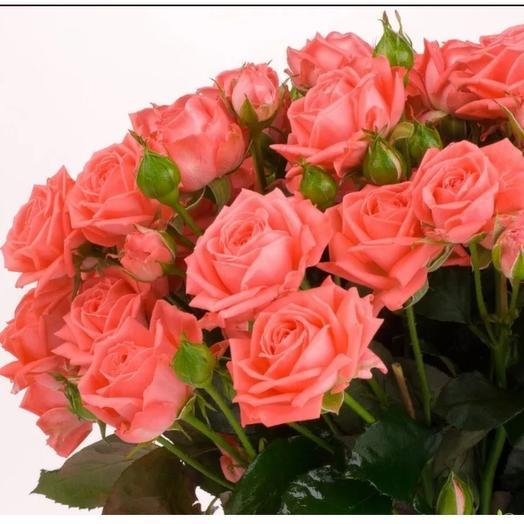 Роза кустовая Барбадос