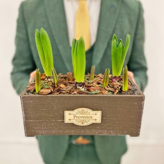 Весенний садик в деревянном ящике