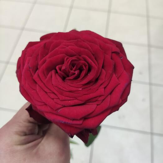 Розы крупная 50 см