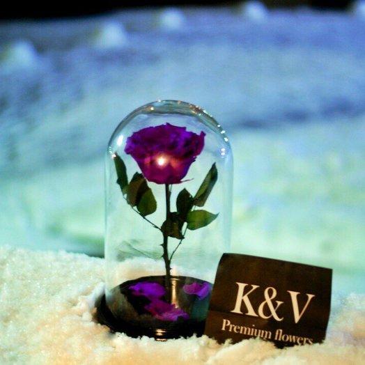 Фиолетовая Роза в Колбе KING: букеты цветов на заказ Flowwow