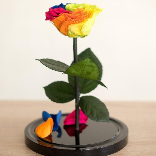 Роза в колбе Медиум радужная