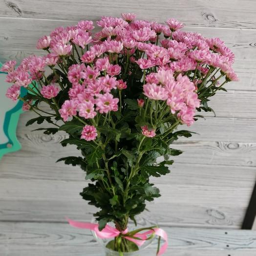 Розовая ромашка: букеты цветов на заказ Flowwow