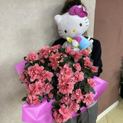 Азалия для взрослой девочки: букеты цветов на заказ Flowwow