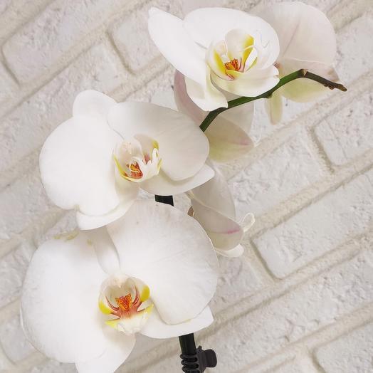 Мадонна: букеты цветов на заказ Flowwow