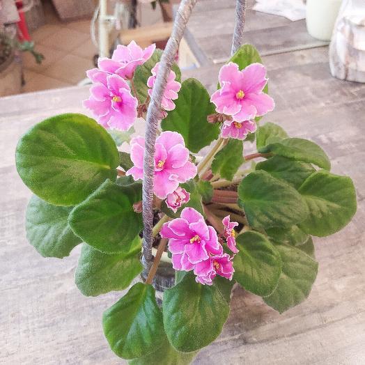 Фиалочка в корзиночке: букеты цветов на заказ Flowwow