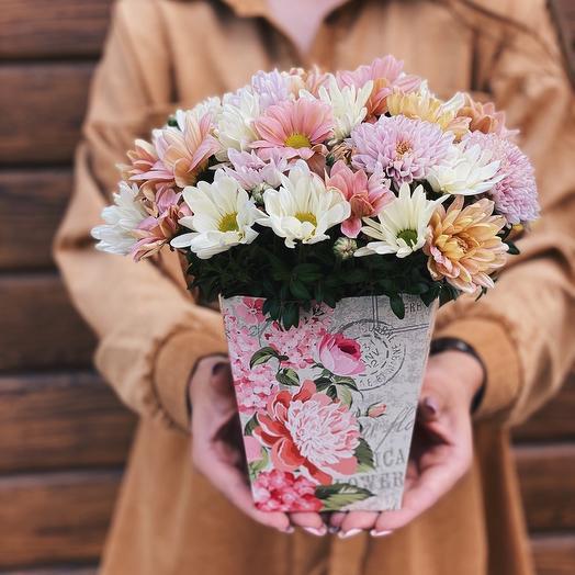 Хризантемы в подарочной коробке
