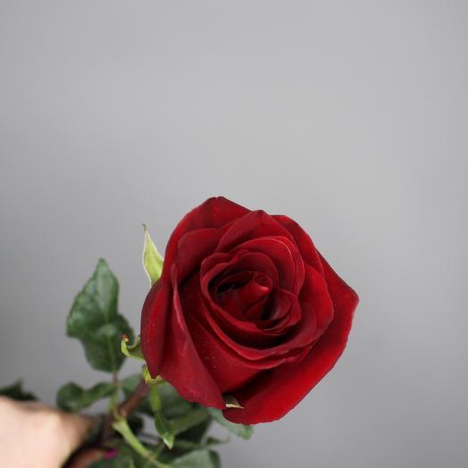 Роза Эквадор (красная) 80 см