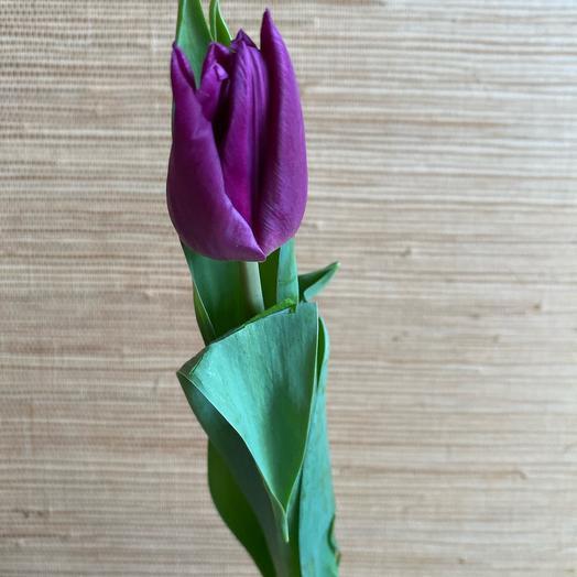 Тюльпан 50 россыпь