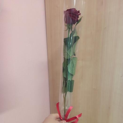Длинная роза