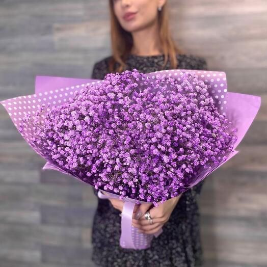 Гипсофила фиолетовая