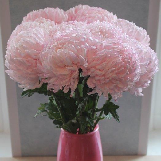 Букет из 10 розовых хризантем: букеты цветов на заказ Flowwow