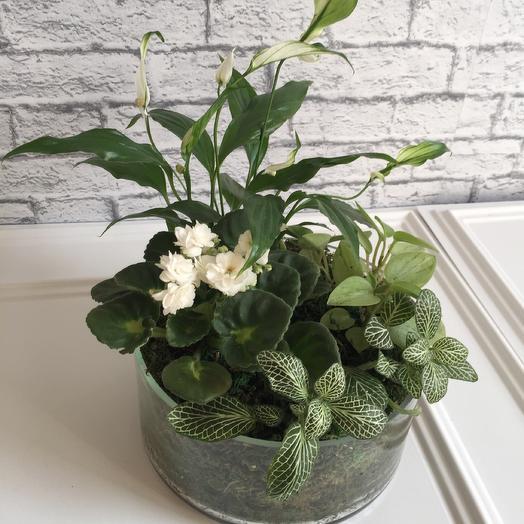 Флорариум «белая Королева»: букеты цветов на заказ Flowwow