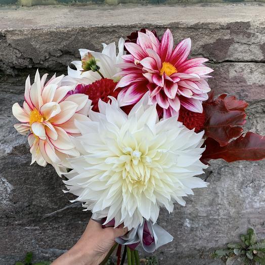 Георгины микс: букеты цветов на заказ Flowwow