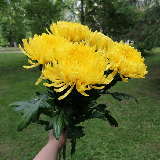 Солнышко моё: букеты цветов на заказ Flowwow
