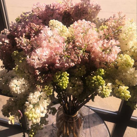 Сирень душистая: букеты цветов на заказ Flowwow