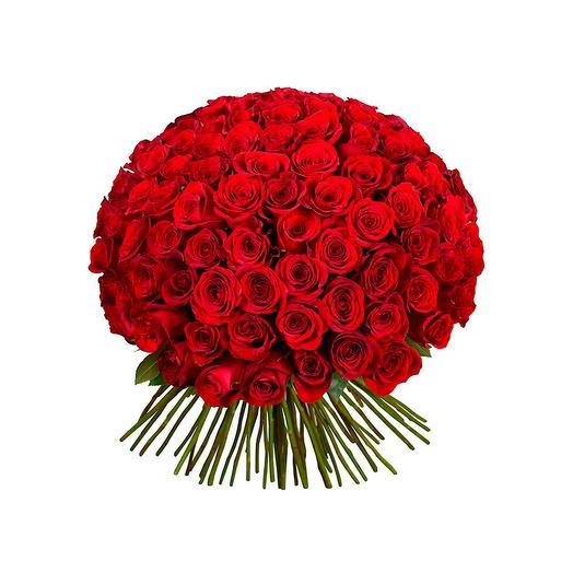 101 красная роза Фридом - Эквадор (50 см)