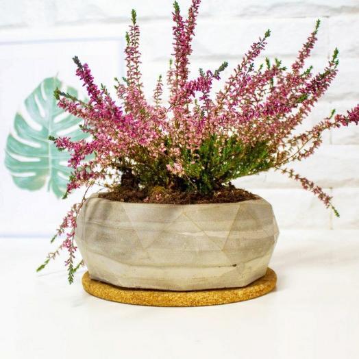Бетонное кашпо для цветов