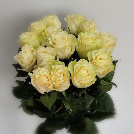 Роза Эквадор mondial 60 см