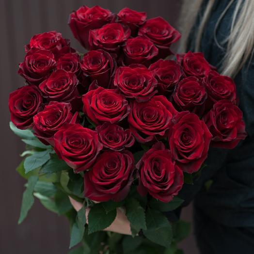 Красная роза Эксплорер