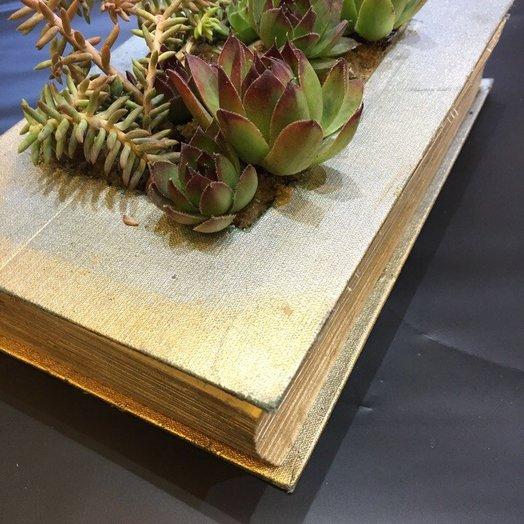 Сукуленты в книге: букеты цветов на заказ Flowwow