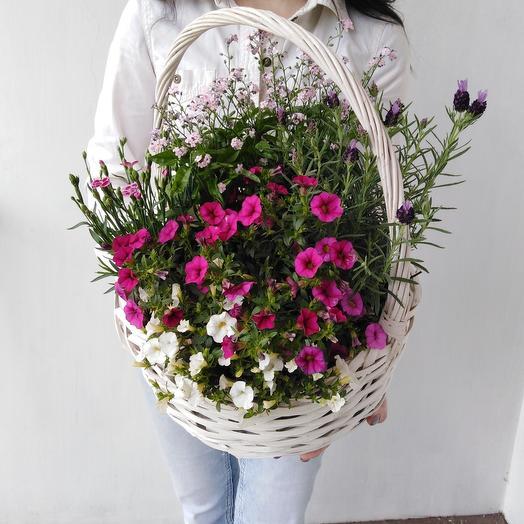 Шикарная корзина из незабудок, лаванды Летний сад: букеты цветов на заказ Flowwow