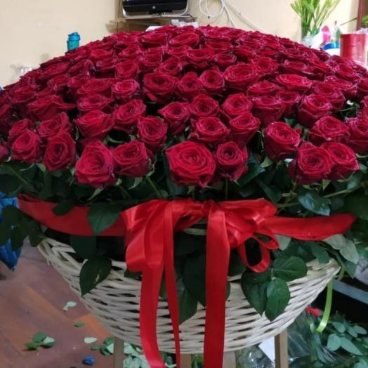Букет из 251 красной розы