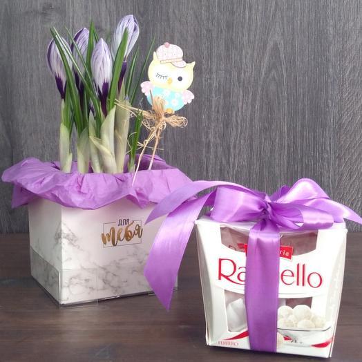 Tender crocus and raffaello