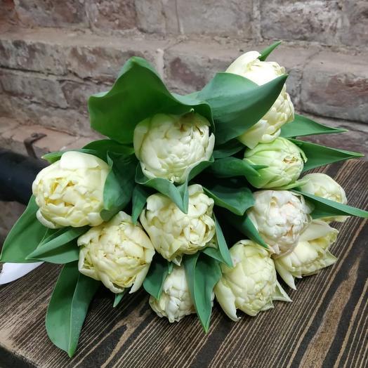 Тюльпан 11шт Cream Pista