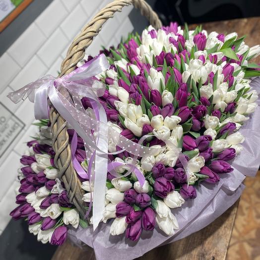 501 Тюльпан