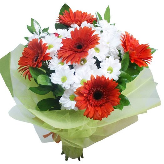 Bright gerbera daisies on a white background. Code 180061