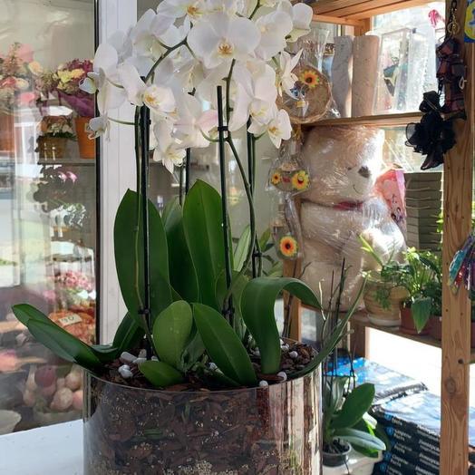 Композиция с орхидеями: букеты цветов на заказ Flowwow