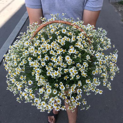 Корзинка с ромашкой Камилла: букеты цветов на заказ Flowwow