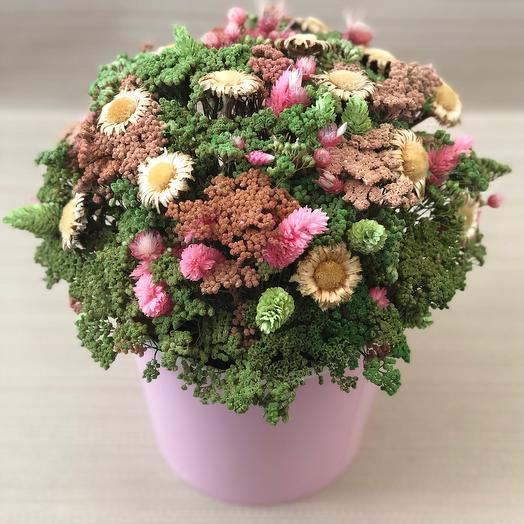 Сухоцветы в розовом ведёрке